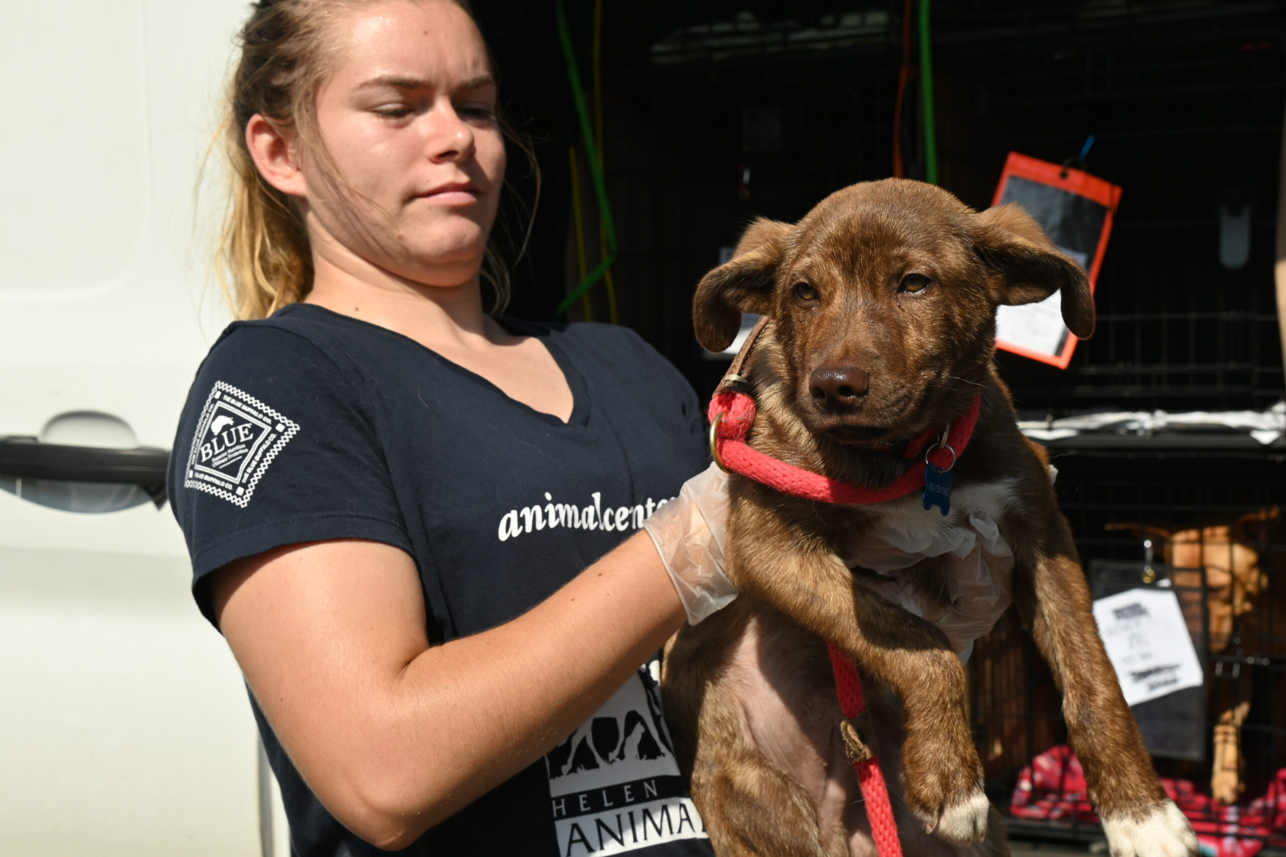 Dog gets off-loaded from van transport