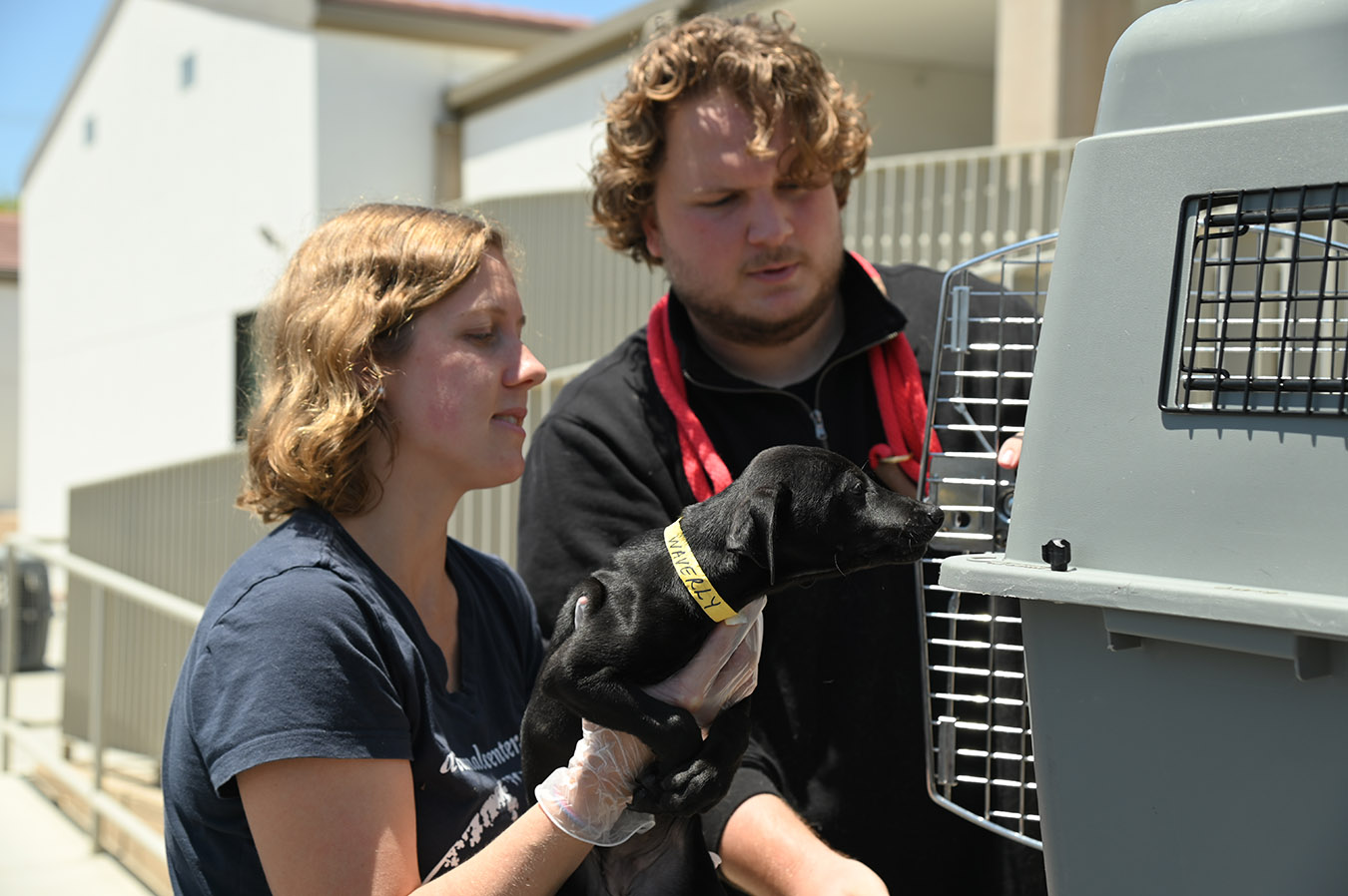 Adoption team members off-load dog from transport