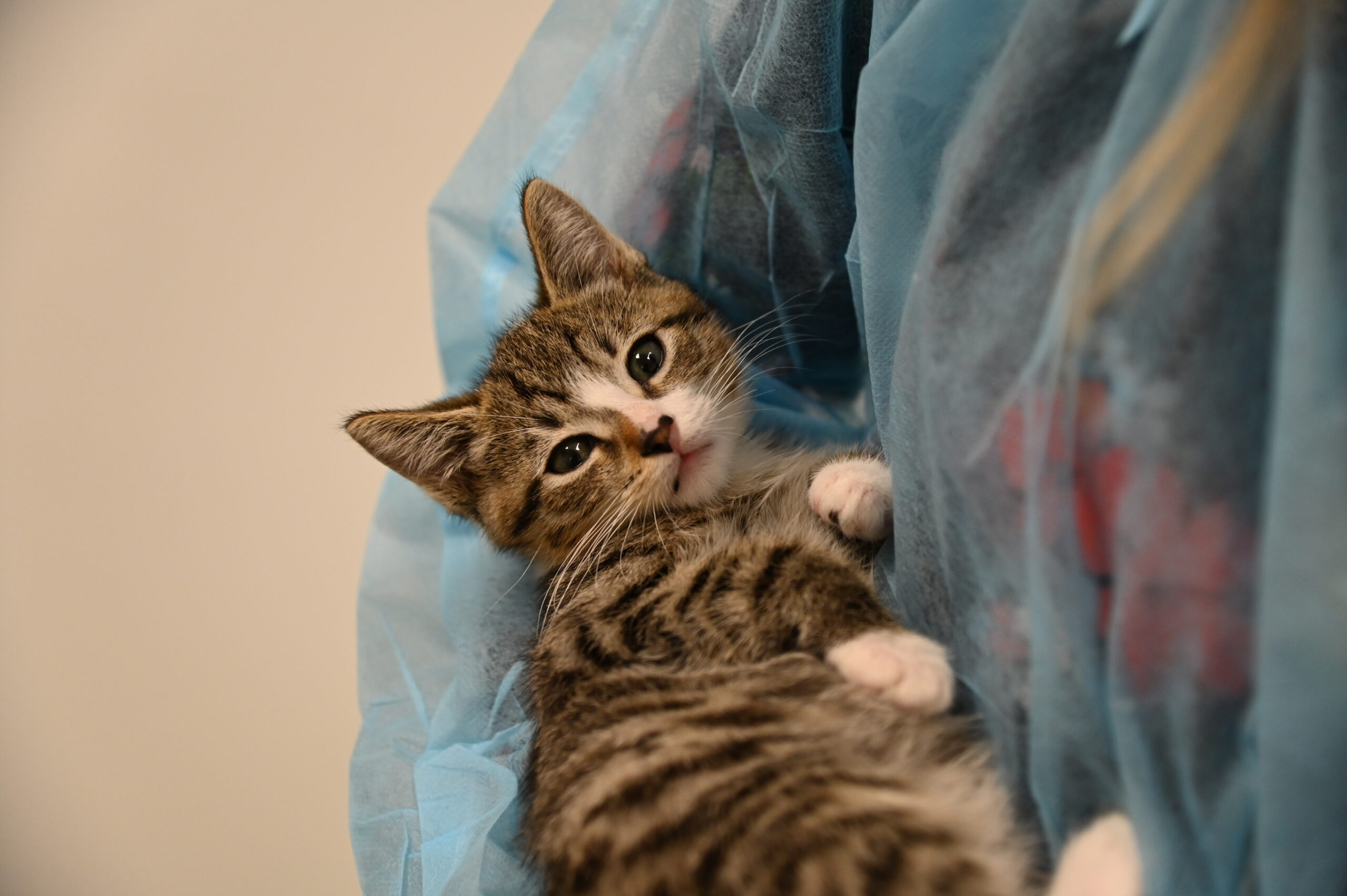 Orphan kitten gets medical check upon arrival